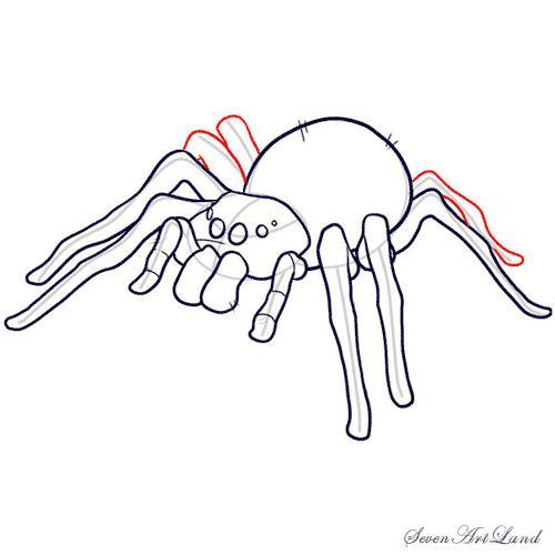 Рисуем паука-птицееда - шаг 9