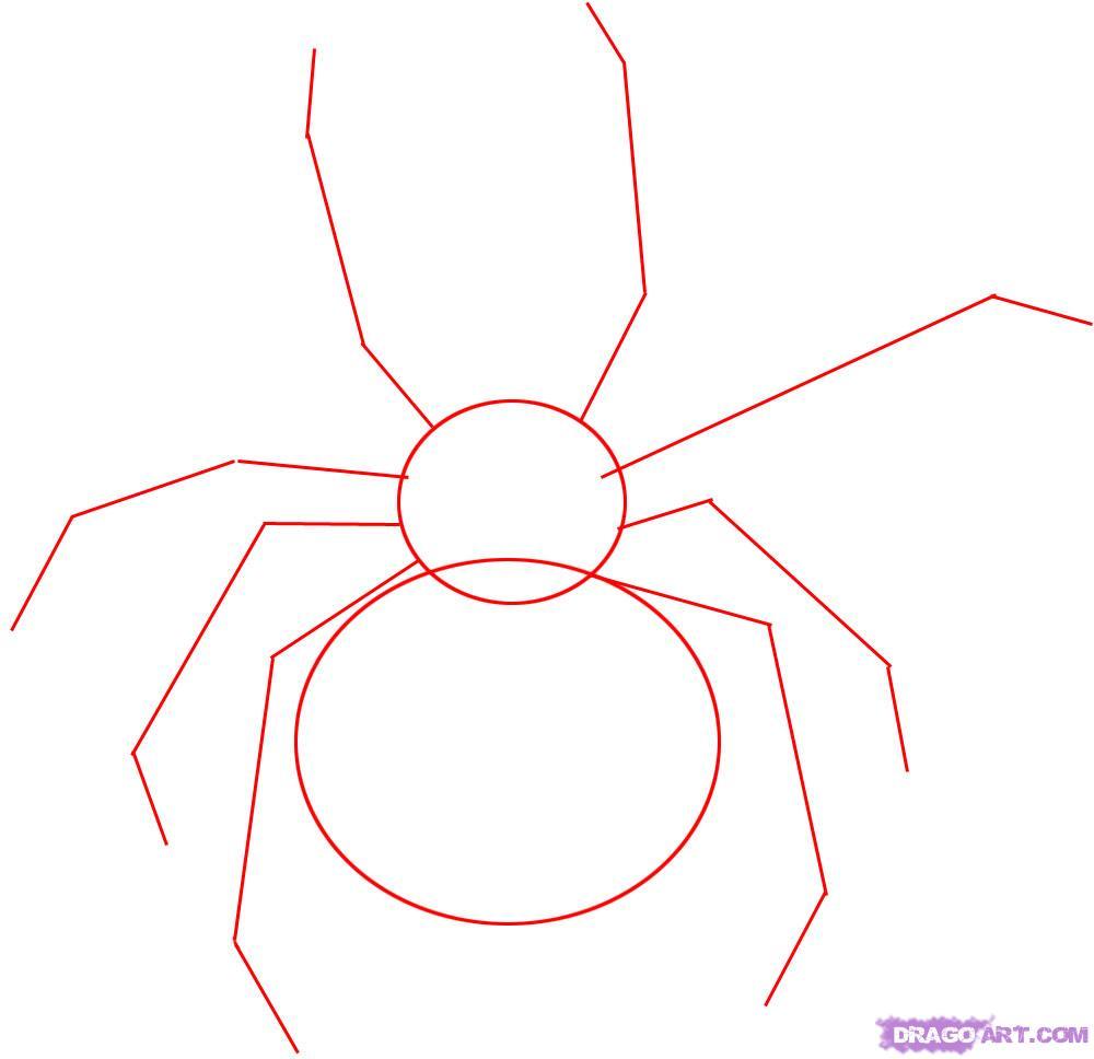 Рисуем паука Черная вдова - шаг 1