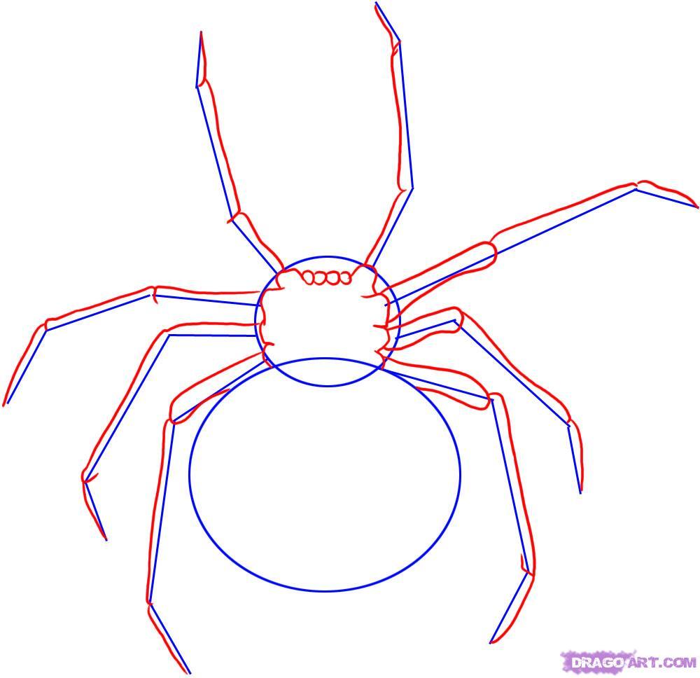 Рисуем паука Черная вдова - шаг 2