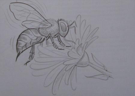 Как нарисовать пчелу карандашом поэтапно