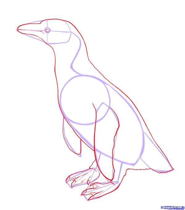 Рисуем Пингвина - шаг 3