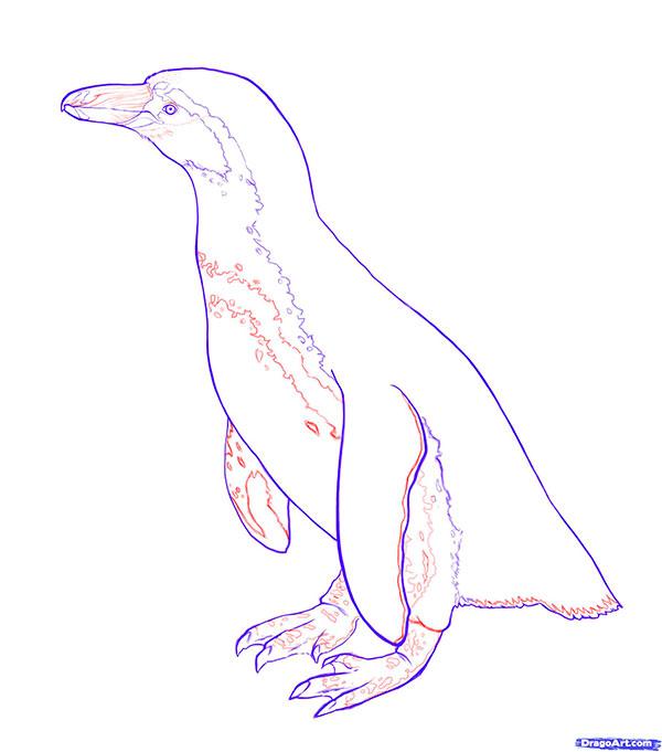 Рисуем Пингвина - шаг 5