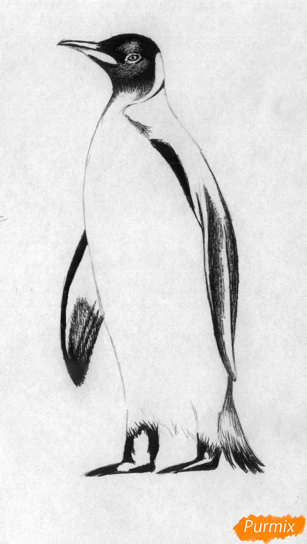 Рисуем пингвина - шаг 2