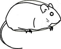 Как просто нарисовать полевую мышку - шаг 3