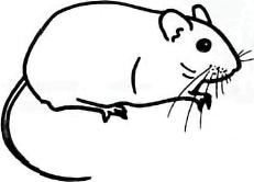 Как просто нарисовать полевую мышку