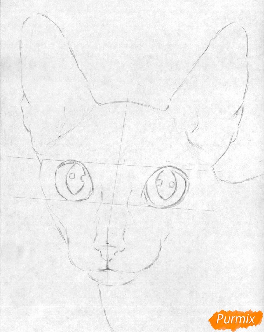 Кот сидит поэтапно карандашом