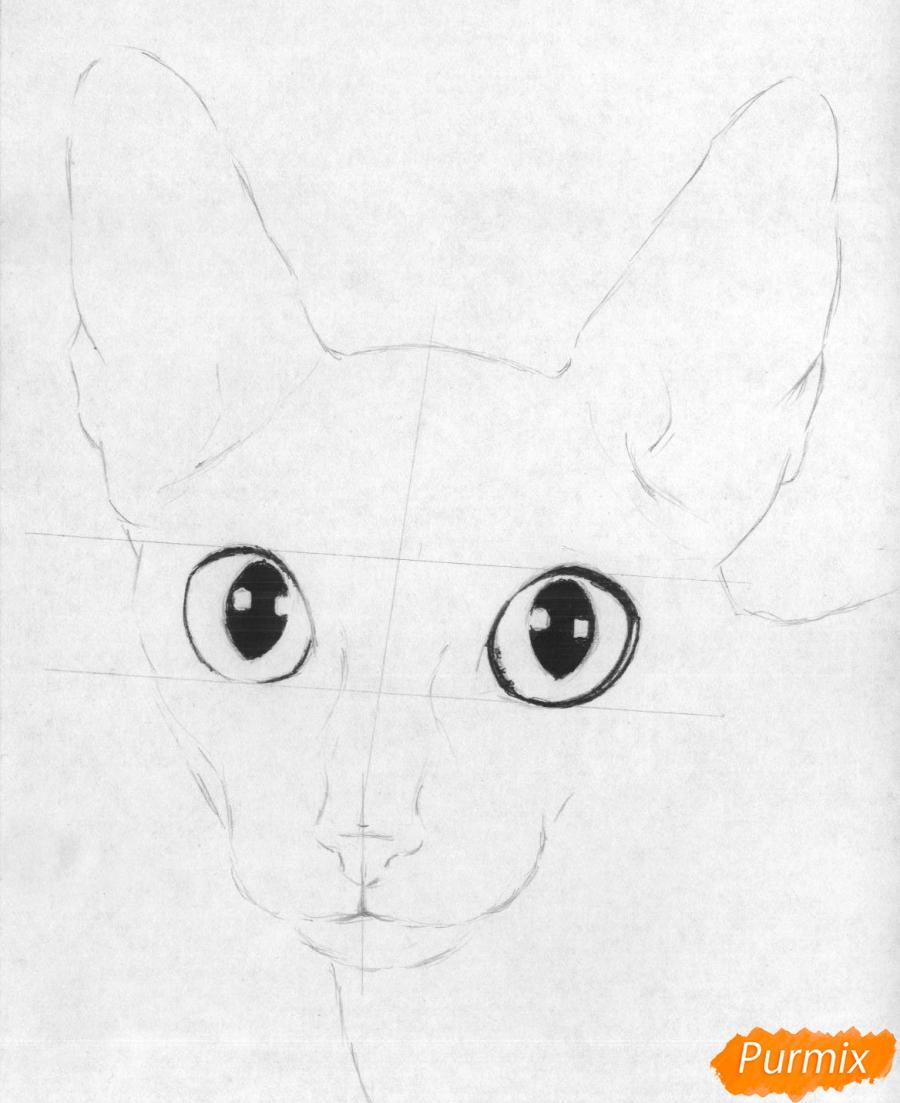 Рисуем портрет кошки породы корниш-рекс - шаг 2
