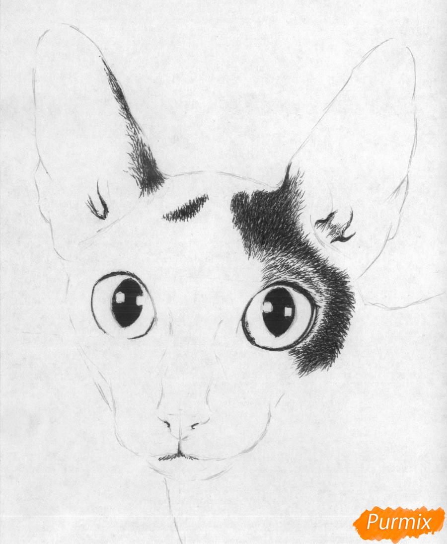 Рисуем портрет кошки породы корниш-рекс - шаг 3