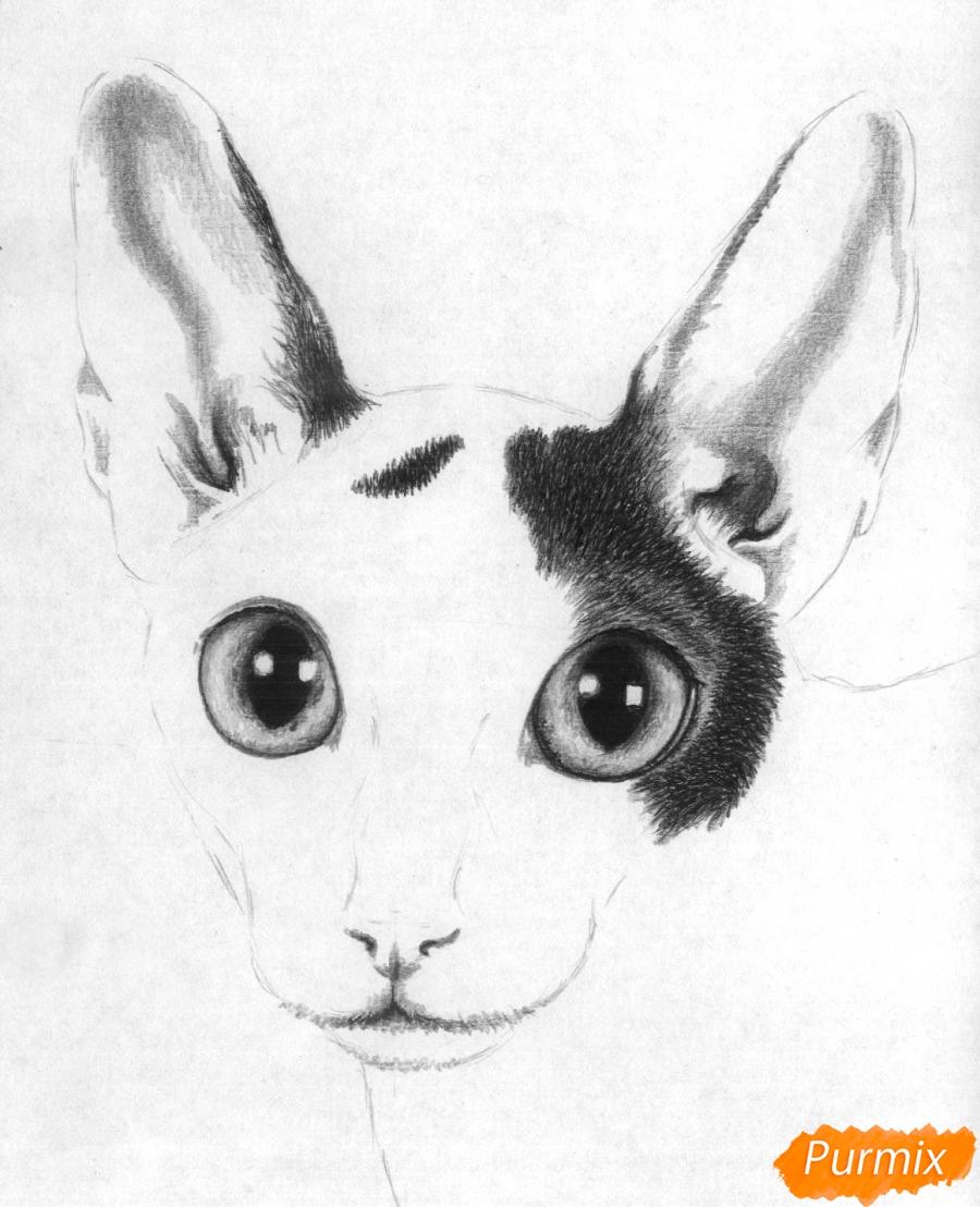 Рисуем портрет кошки породы корниш-рекс - шаг 4