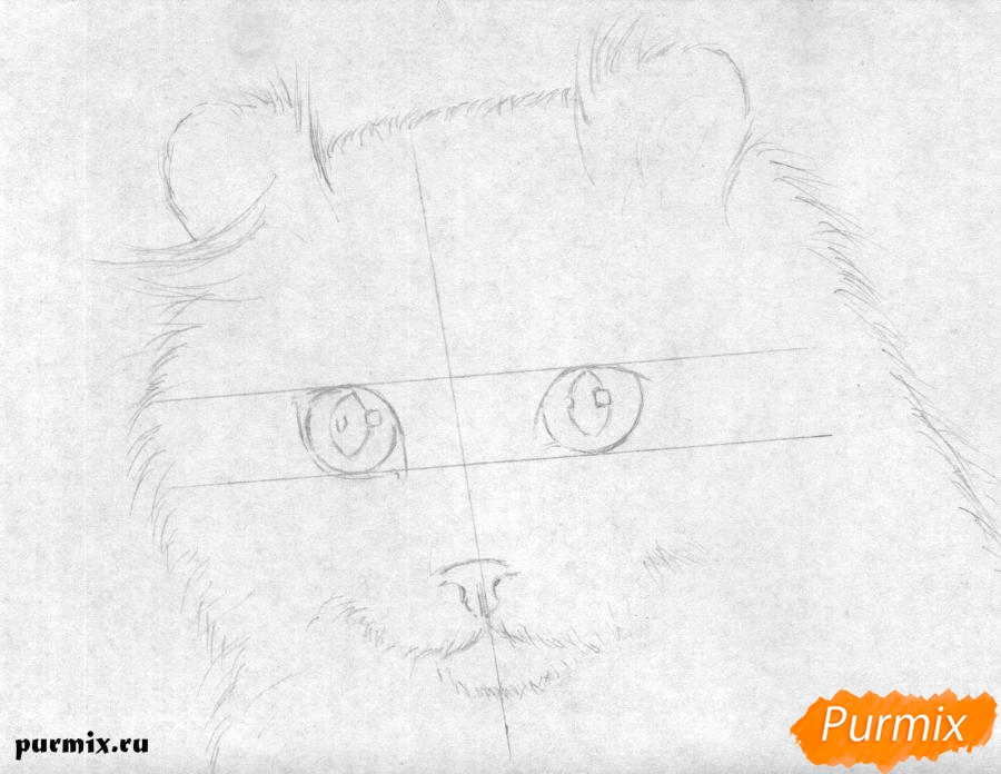 Рисуем портрет кошки породы Американский кёрл - шаг 1