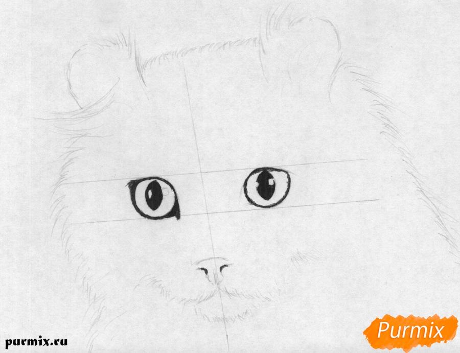 Рисуем портрет кошки породы Американский кёрл - шаг 2