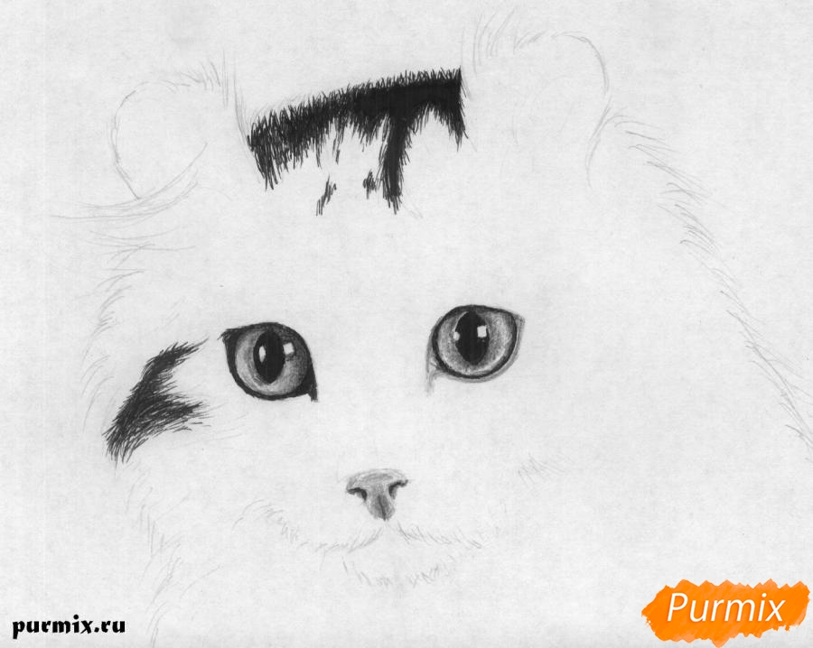 Рисуем портрет кошки породы Американский кёрл - шаг 3
