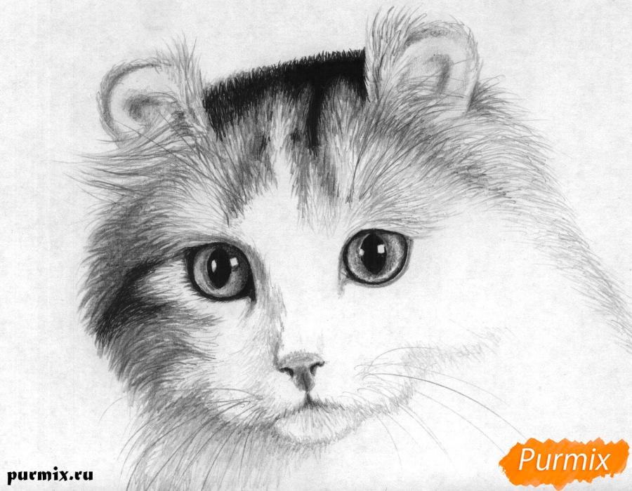 Как нарисовать портрет кошки породы Американский кёрл карандашом поэтапно