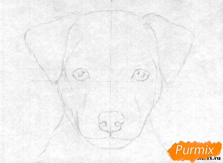 Рисуем портрет щенка породы джек-рассел-терьер - шаг 1