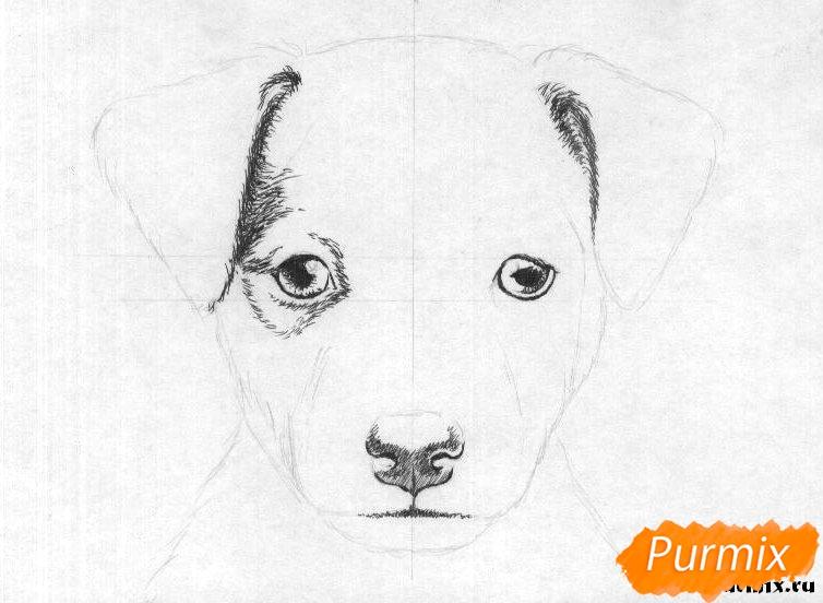 Рисуем портрет щенка породы джек-рассел-терьер - шаг 2
