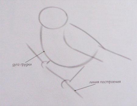Рисуем воробья на ветке - фото 1