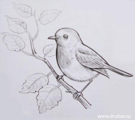 Рисуем воробья на ветке - фото 4