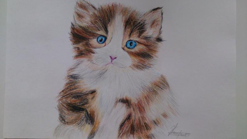 Рисуем пушистого котенка цветными карандашами - шаг 12