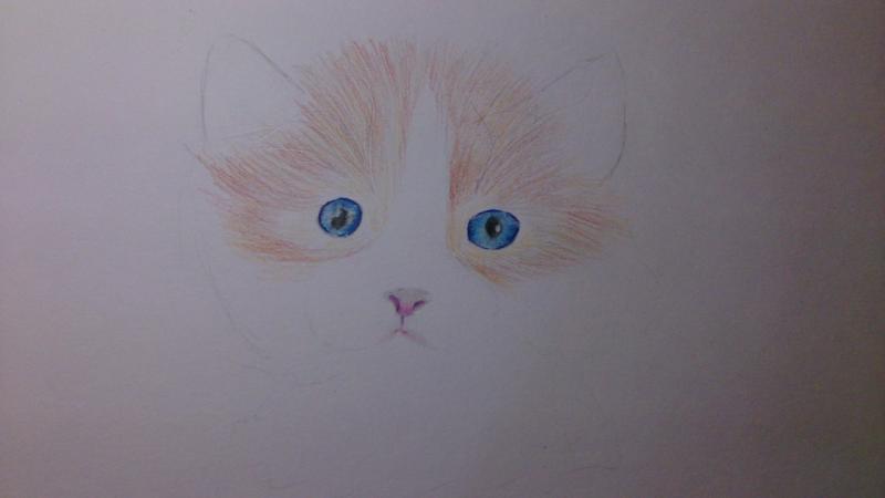 Рисуем пушистого котенка цветными карандашами - шаг 4