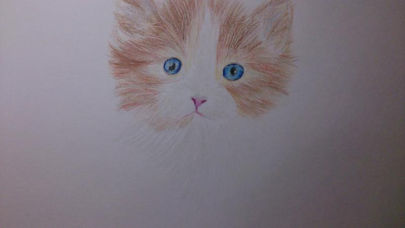 Рисуем пушистого котенка цветными карандашами - шаг 7