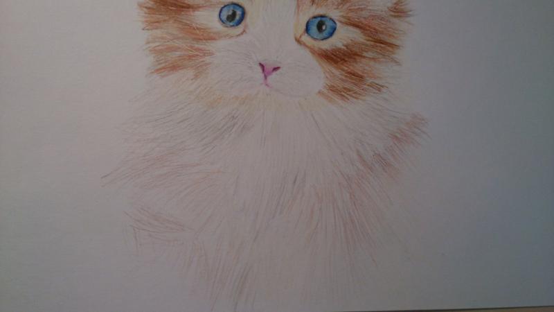 Рисуем пушистого котенка цветными карандашами - шаг 9