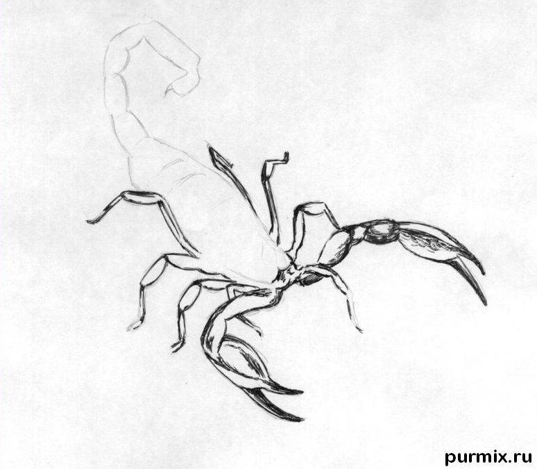 Рисуем реалистичного скорпиона простым