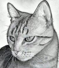 Рисунок реалистичную голову  кошки