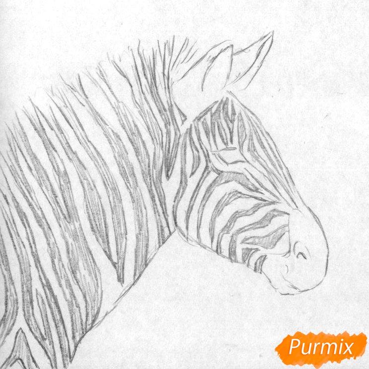 Как нарисовать реалистичную голову зебры карандашом и ручкой поэтапно - шаг 1
