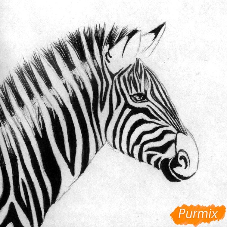 Как нарисовать реалистичную голову зебры карандашом и ручкой поэтапно - шаг 2