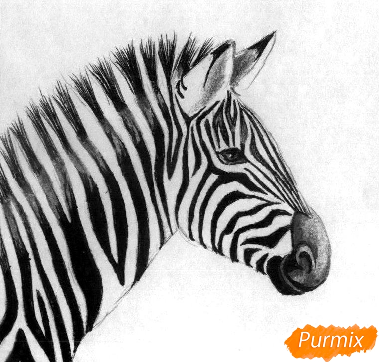 Как нарисовать реалистичную голову зебры карандашом и ручкой поэтапно - шаг 3