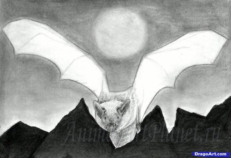 Рисуем реалистичную летучую мышь - фото 11