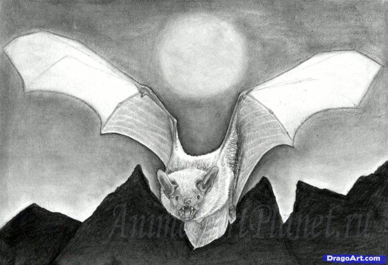 Рисуем реалистичную летучую мышь - фото 13