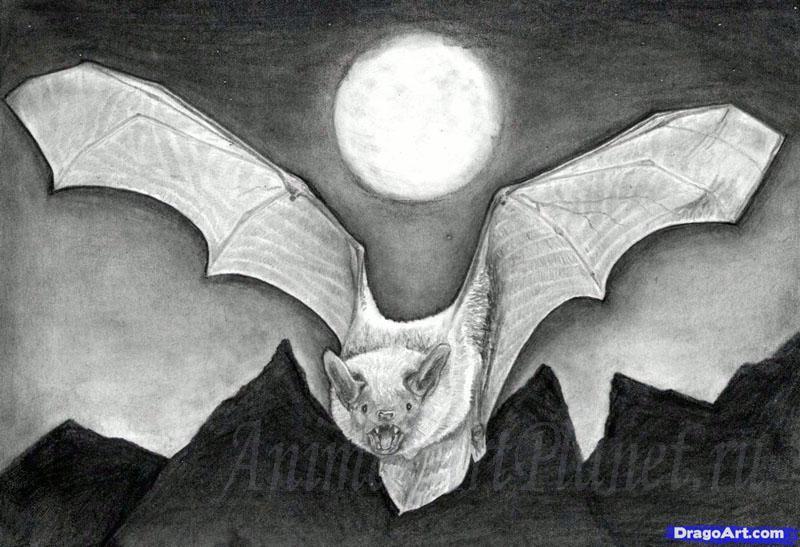 Рисуем реалистичную летучую мышь - фото 15