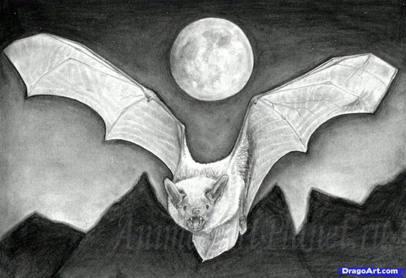 Рисуем реалистичную летучую мышь - фото 16