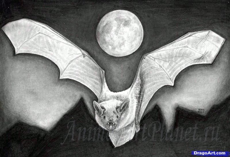 Рисуем реалистичную летучую мышь - фото 17