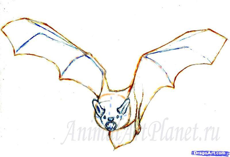 Рисуем реалистичную летучую мышь - фото 4