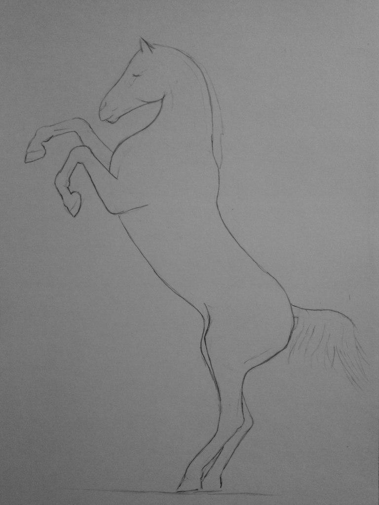Rearing horse sketches pencil