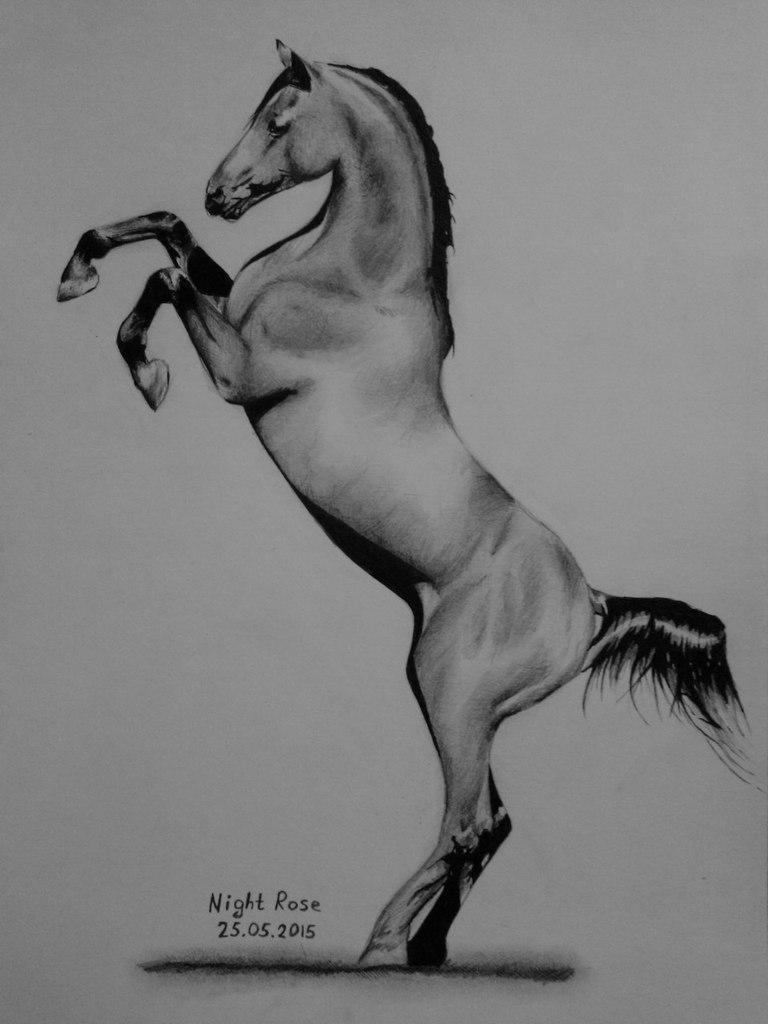 Как нарисовать лошадь на дыбах простым карандашом поэтапно