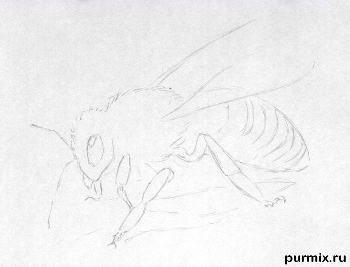 Рисуем реалистичную пчелу - шаг 1