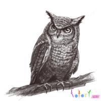 Рисунок реалистичную сову (филина)