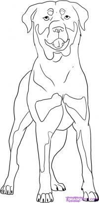 Как нарисовать Ротвейлера карандашом поэтапно
