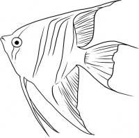 рыбу ангел карандашом