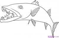 рыбу Барракуда карандашом