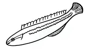 Как просто нарисовать  рыбу