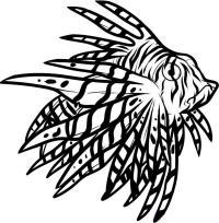 рыбу крылатку карандашом