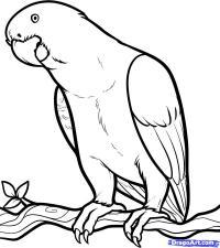 Как нарисовать серого африканского попугая карандашом поэтапно
