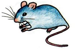 Как просто нарисовать серую мышь карандашом поэтапно