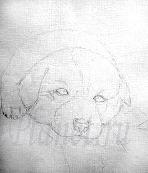 Рисуем щенка цветными карандашами - шаг 1