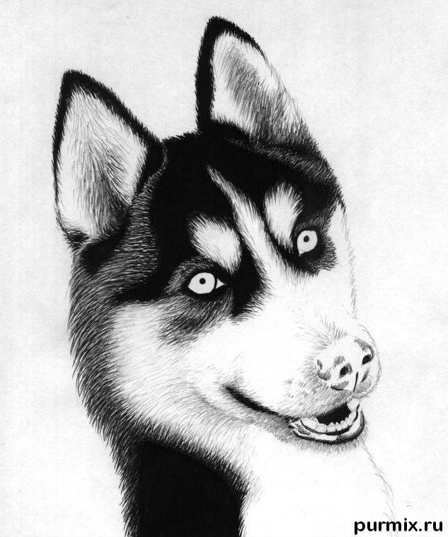 Нарисовать собаку простым карандашом