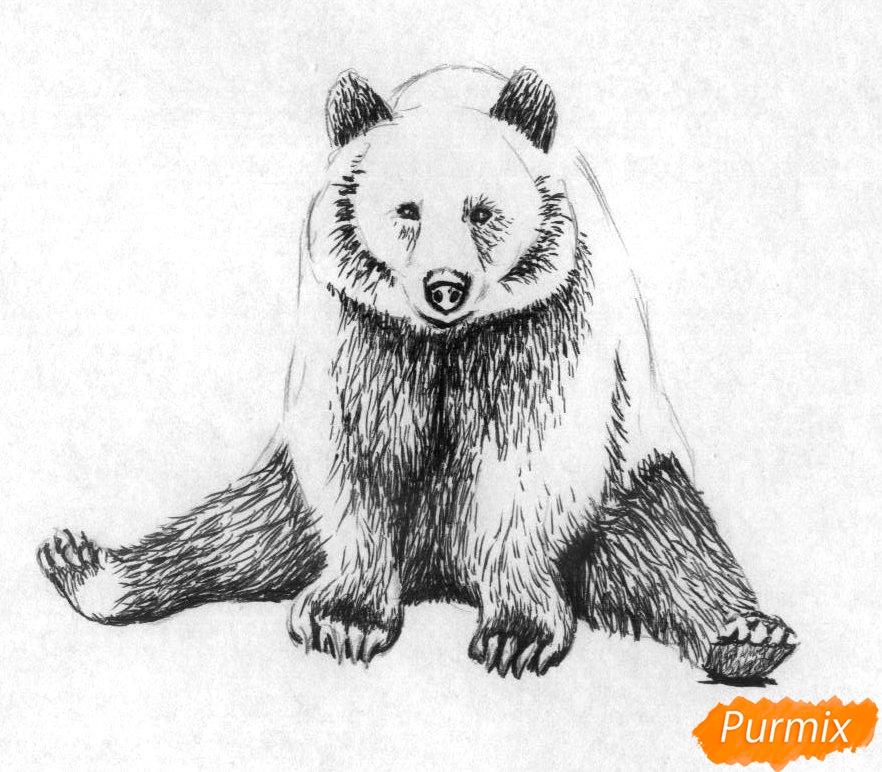Рисуем сидящего медведя карандашами и чёрной ручкой - шаг 2